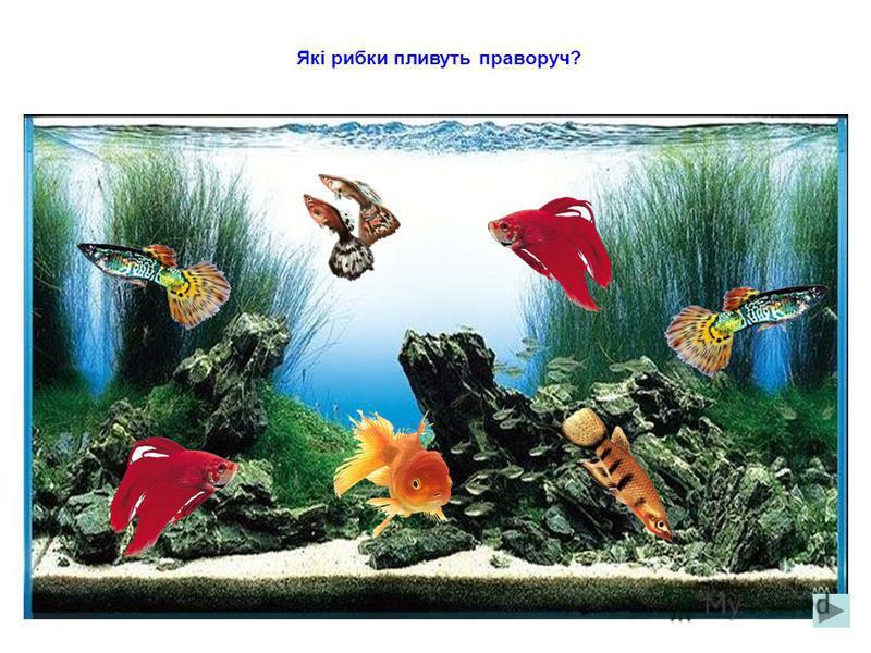 Які рибки пливуть ліворуч?