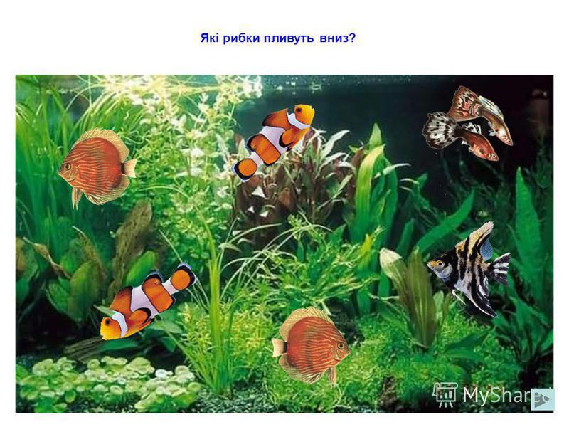 Які рибки пливуть праворуч?