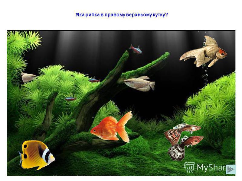 Які рибки пливуть вверх?