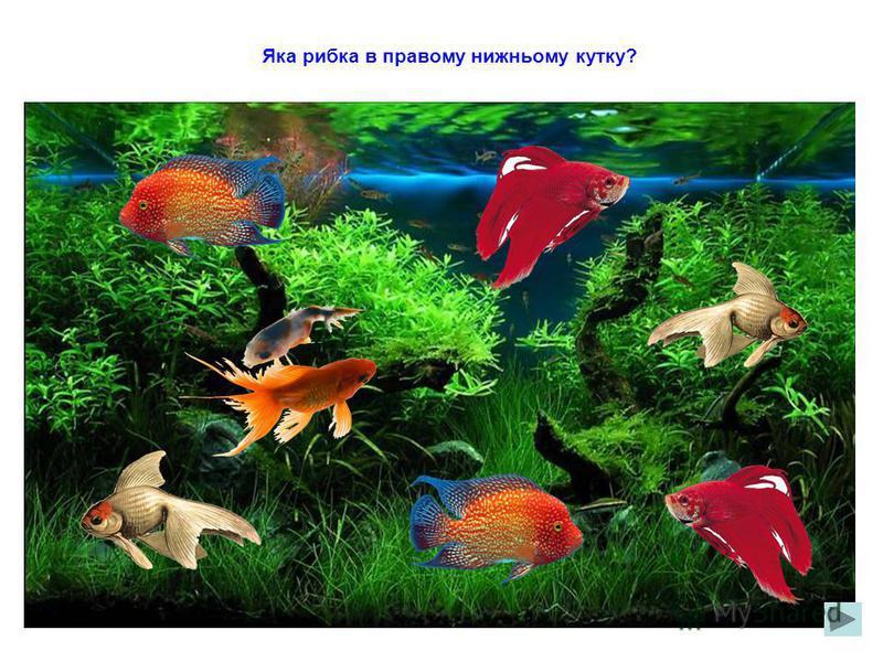 Яка рибка в лівому верхньому кутку?