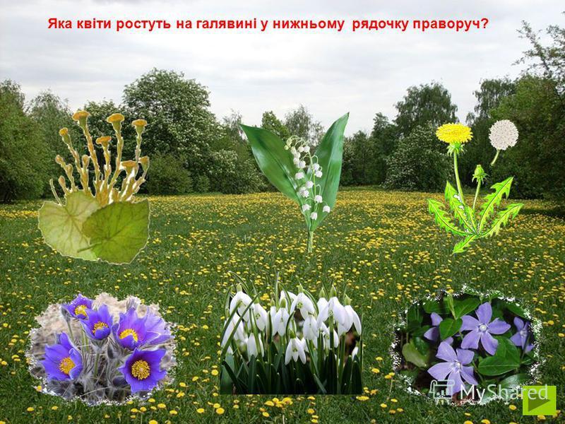 Яка квіти ростуть на галявині у верхньому рядочку ліворуч?