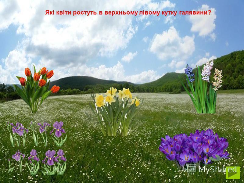 Розвиваюча гра НА ВЕСНЯНІЙ ГАЛЯВИНІ Мета: Розвивати вміння орієнтуватися на площині. Закріпити назви весняних квітів. Вдосконалювати зв'язне мовлення.
