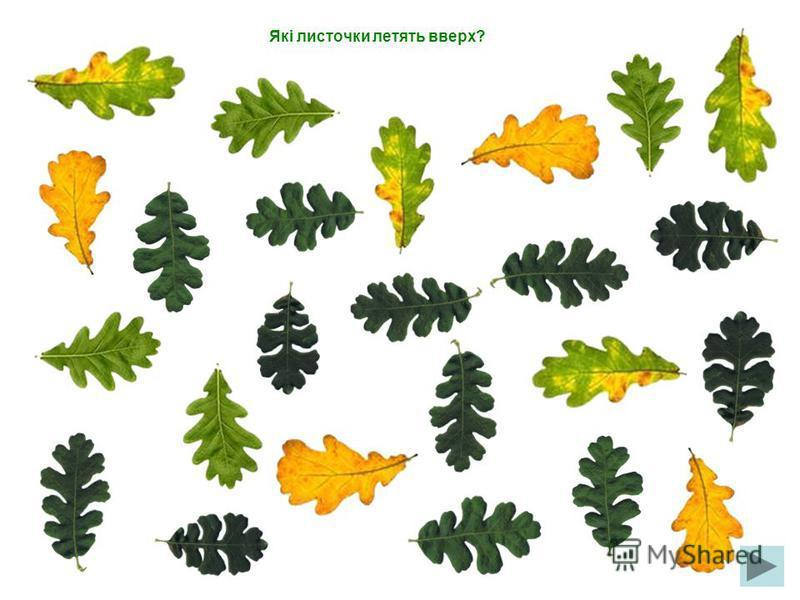 Які листочки летять праворуч?
