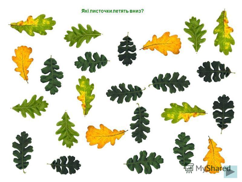 Які листочки летять ліворуч?