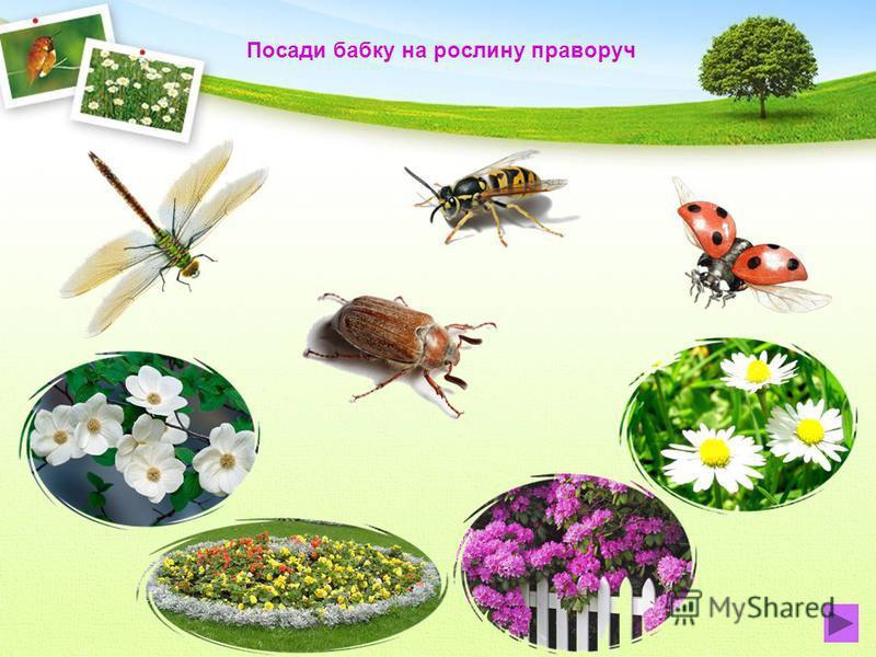 Посади метелика на рослину посередині