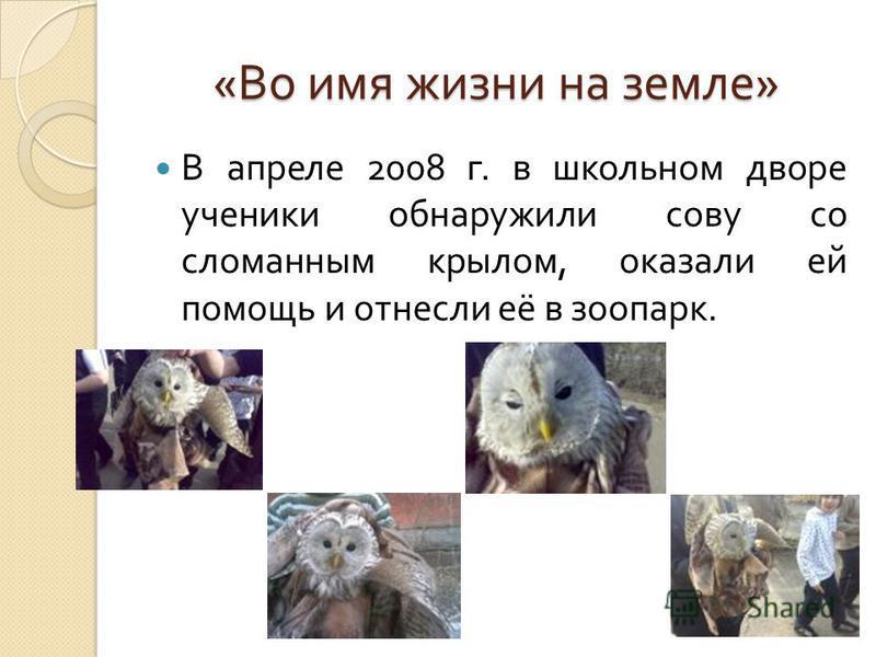 « Во имя жизни на земле » В апреле 2008 г. в школьном дворе ученики обнаружили сову со сломанным крылом, оказали ей помощь и отнесли её в зоопарк.