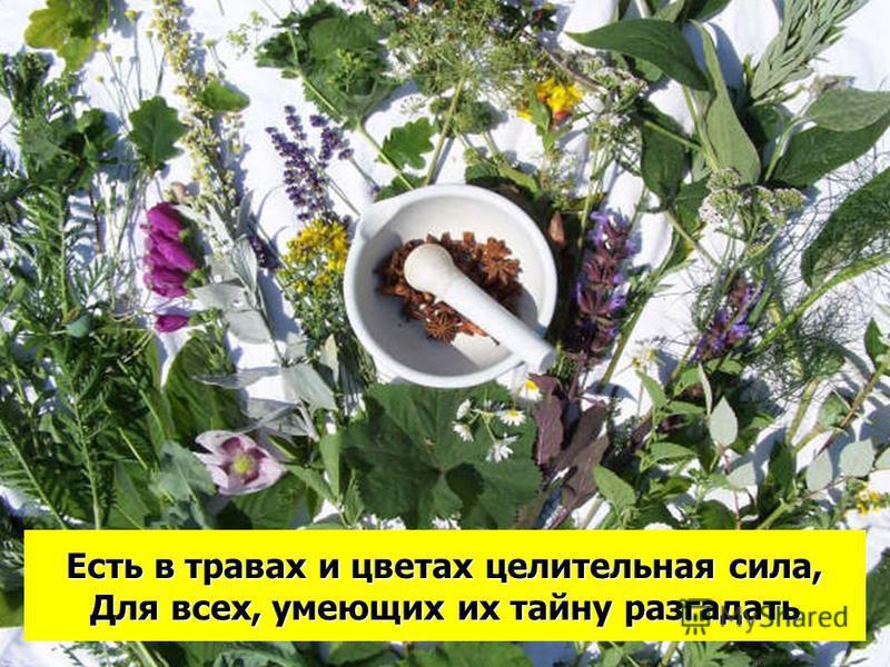 Есть в травах и цветах целительная сила, Для всех, умеющих их тайну разгадать