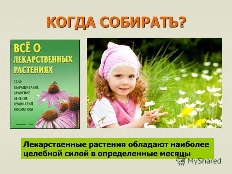 КОГДА СОБИРАТЬ? Лекарственные растения обладают наиболее целебной силой в определенные месяцы