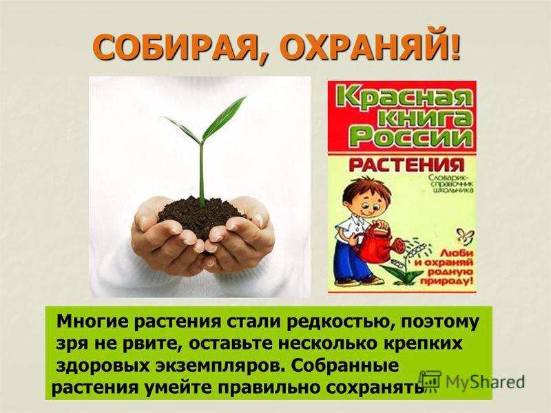 Многие растения стали редкостью, поэтому зря не рвите, оставьте несколько крепких здоровых экземпляров. Собранные растения умейте правильно сохранять СОБИРАЯ, ОХРАНЯЙ!