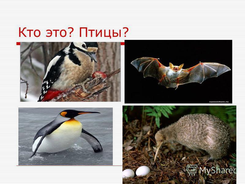 Кто это? Птицы?