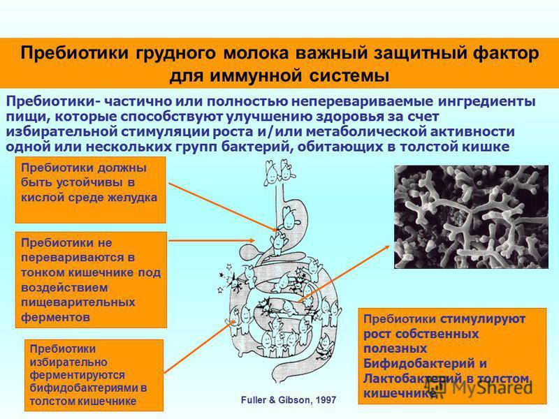 Пребиотики грудного молока важный защитный фактор для иммунной системы Пребиотики- частично или полностью неперевариваемые ингредиенты пищи, которые способствуют улучшению здоровья за счет избирательной стимуляции роста и/или метаболической активност