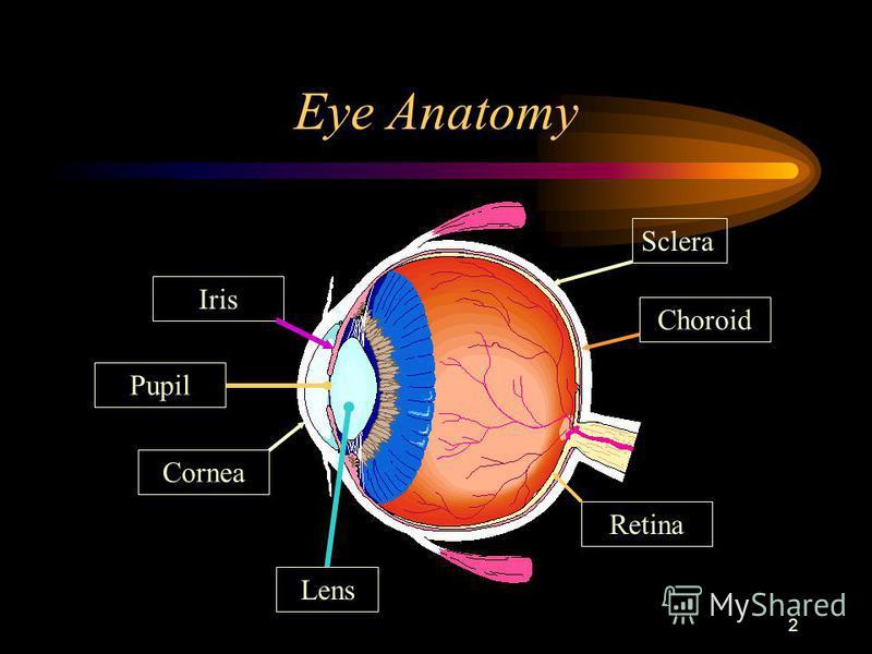 2 Eye Anatomy ScleraChoroid Retina Cornea IrisPupil Lens