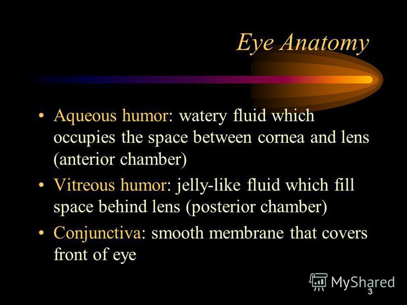 3 Eye Anatomy Aqueous humor: watery fluid which occupies the space between cornea and lens (anterior chamber) Vitreous humor: jelly-like fluid which fill space behind lens (posterior chamber) Conjunctiva: smooth membrane that covers front of eye