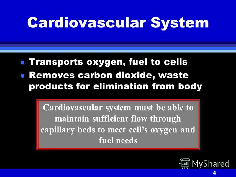 4 Cardiovascular System l Transports oxygen, fuel to cells l Removes carbon dioxide, waste products for elimination from body Cardiovascular system must be able to maintain sufficient flow through capillary beds to meet cells oxygen and fuel needs