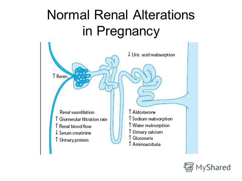 Normal Renal Alterations in Pregnancy