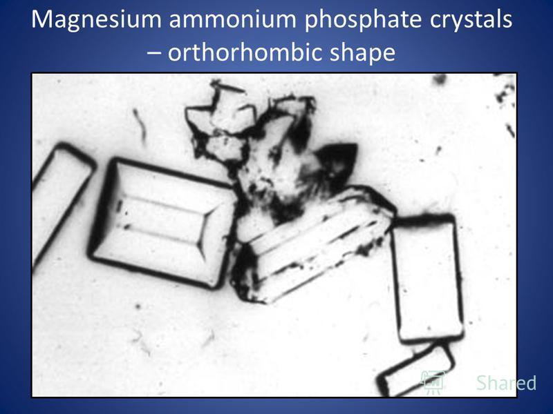 Magnesium ammonium phosphate crystals – orthorhombic shape