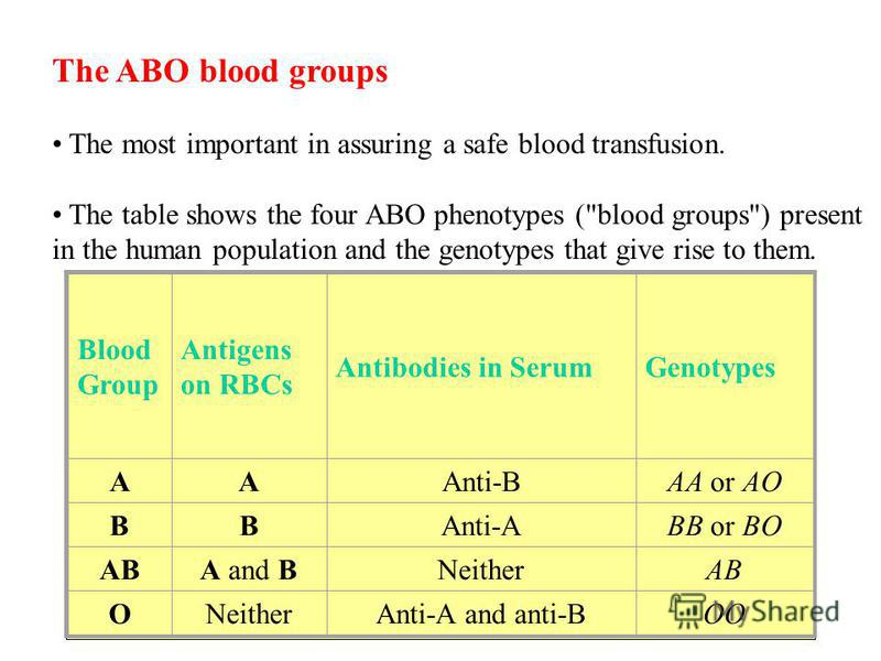 The ABO blood groups The most important in assuring a safe blood transfusion. The table shows the four ABO phenotypes (
