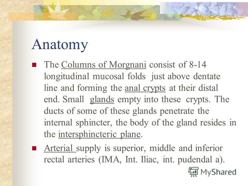 Anatomy The Columns of Morgnani consist of 8-14 longitudinal mucosal folds just above dentate line and forming the anal crypts at their distal end. Small glands empty into these crypts. The ducts of some of these glands penetrate the internal sphinct