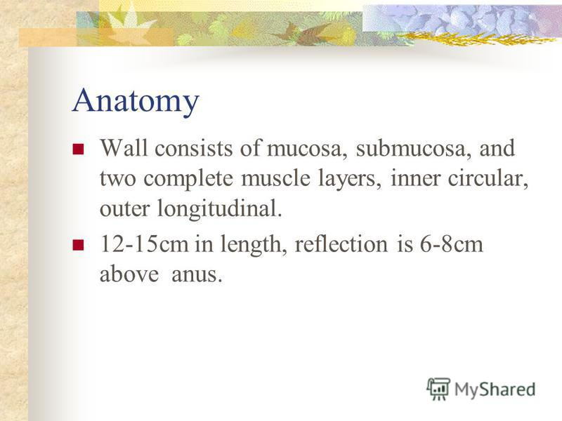 Anatomy Wall consists of mucosa, submucosa, and two complete muscle layers, inner circular, outer longitudinal. 12-15cm in length, reflection is 6-8cm above anus.