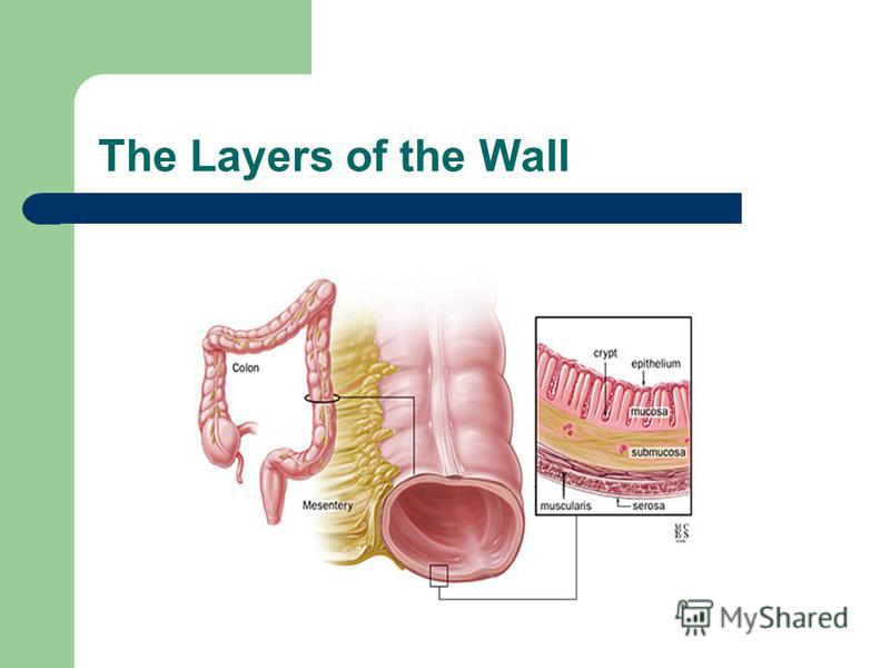 The Layers of the Wall