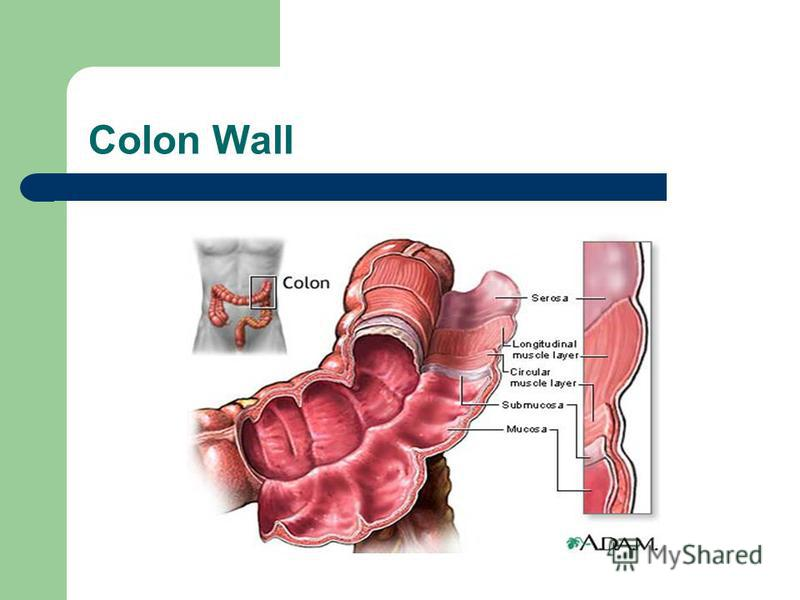 Colon Wall