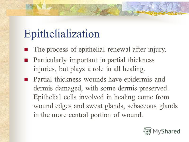 Epithelialization The process of epithelial renewal after injury. Particularly important in partial thickness injuries, but plays a role in all healing. Partial thickness wounds have epidermis and dermis damaged, with some dermis preserved. Epithelia