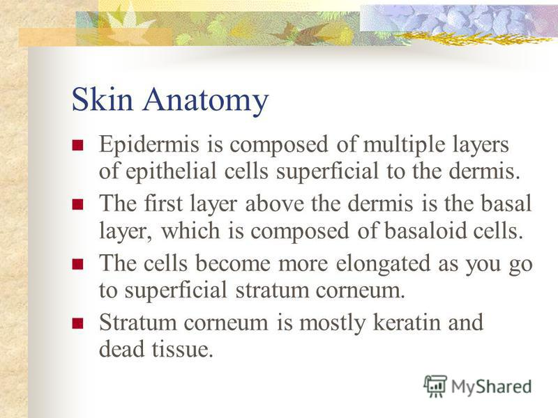 Skin Anatomy Epidermis is composed of multiple layers of epithelial cells superficial to the dermis. The first layer above the dermis is the basal layer, which is composed of basaloid cells. The cells become more elongated as you go to superficial st