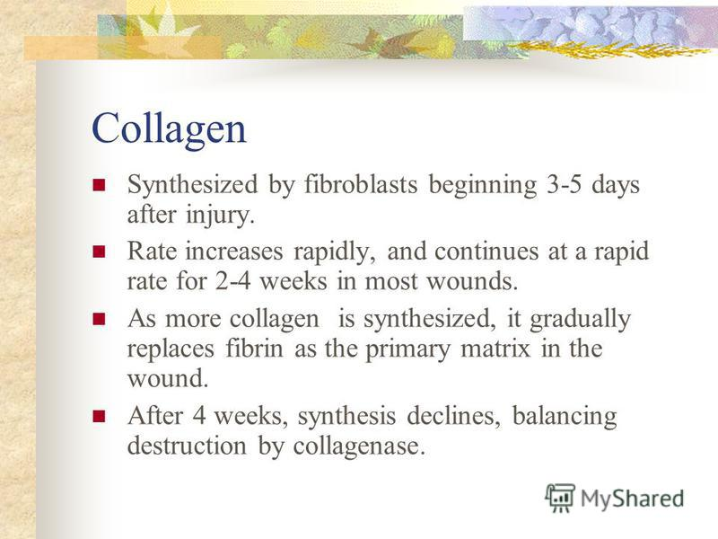 Collagen Synthesized by fibroblasts beginning 3-5 days after injury. Rate increases rapidly, and continues at a rapid rate for 2-4 weeks in most wounds. As more collagen is synthesized, it gradually replaces fibrin as the primary matrix in the wound.