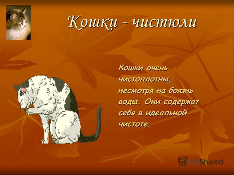 «Гуляю сама по себе» Не всем удается добиться дружбы кошки. Она независима и тонко чувствует ваше отношение к ней.