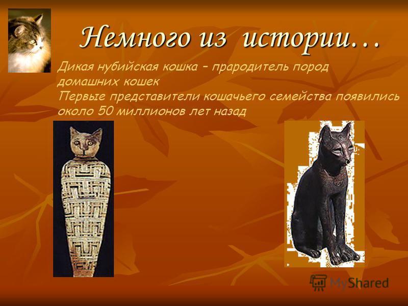 Кошки и физика «Мой кот, как радиоприёмник, Зелёным глазом ловит мир.» А. Вознесенский