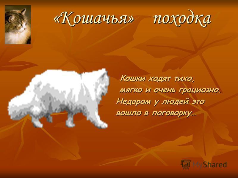 Немного из истории… Дикая нубийская кошка – прародитель пород домашних кошек Первые представители кошачьего семейства появились около 50 миллионов лет назад