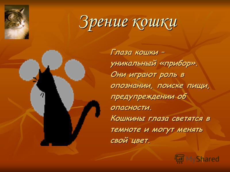 Кошка, электричество и теплота Кошка не пахнет, чтобы её не заметила добыча. Когда ей холодно, она сворачивается клубком. Кошки не всегда любят, когда их гладят, так как их шерсть искрит – электризуется.