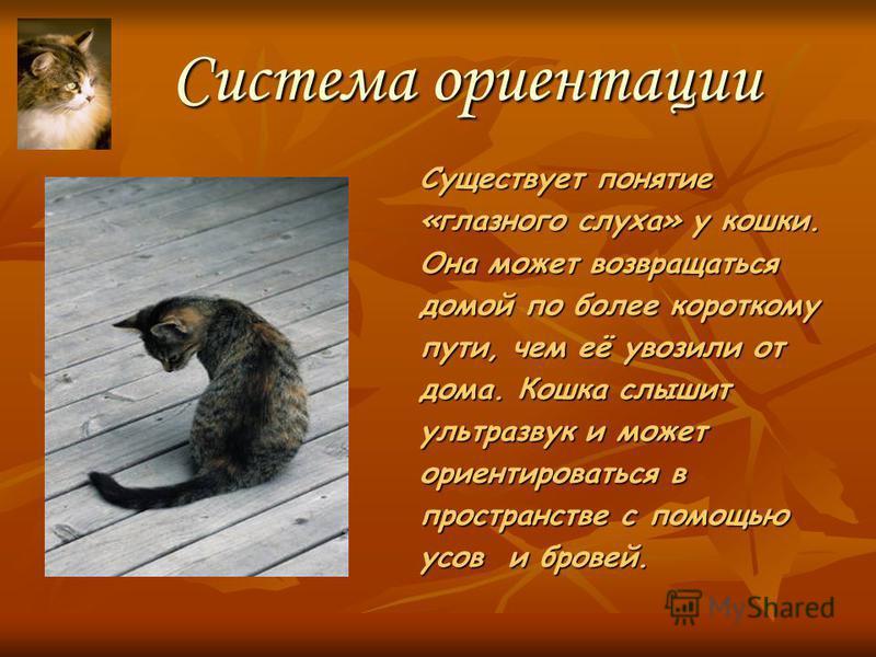 Зрение кошки Глаза кошки – уникальный «прибор». Они играют роль в опознании, поиске пищи, предупреждении об опасности. Кошкины глаза светятся в темноте и могут менять свой цвет.