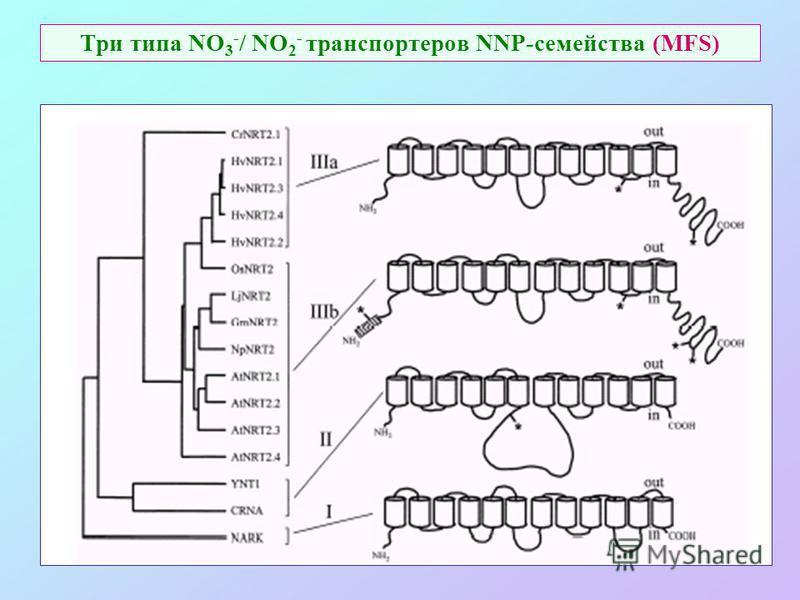 Три типа NO 3 - / NO 2 - транспортеров NNP-семейства (MFS)