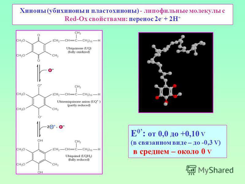 Хиноны (убихиноны и пластохиноны) - липофильные молекулы с Red-Ox свойствами: перенос 2 е - + 2Н + E 0 : от 0,0 до +0,10 V (в связанном виде – до -0,3 V ) в среднем – около 0 V
