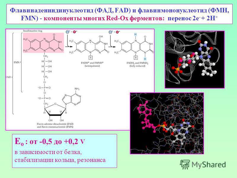 Флавинадениндинуклеотид (ФАД, FAD) и флавинмононуклеотид (ФМН, FMN) - компоненты многих Red-Ox ферментов: перенос 2 е - + 2Н + E o : от -0,5 до +0,2 V в зависимости от белка, стабилизации кольца, резонанса