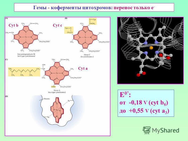 Гемы - коферменты цитохромов: перенос только е - E 0 : от -0,18 V (cyt b 6 ) до +0,55 V (cyt a 3 ) Cyt bCyt с Cyt а