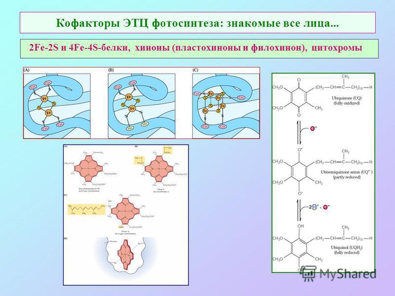 Кофакторы ЭТЦ фотосинтеза: знакомые все лица... 2Fe-2S и 4Fe-4S-белки, хиноны (пластохиноны и филлохинон), цитохромы