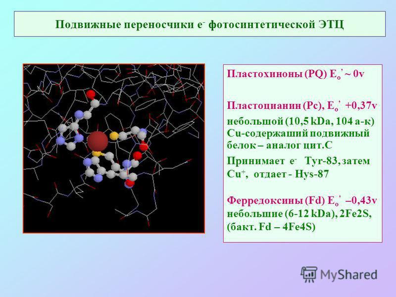 Подвижные переносчики е - фотосинтетической ЭТЦ Пластохиноны (PQ) E o ~ 0v Пластоцианин (Pc), E o +0,37v небольшой (10,5 kDa, 104 а-к) Cu-содержащий подвижный белок – аналог цит.С Принимает е - Tyr-83, затем Cu +, отдает - Hys-87 Ферредоксины (Fd) E