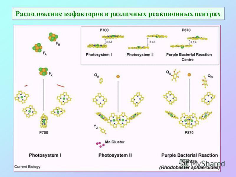 Расположение кофакторов в различных реакционных центрах
