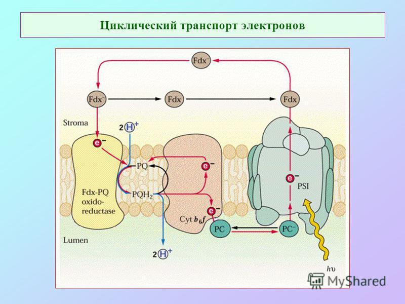Циклический транспорт электронов