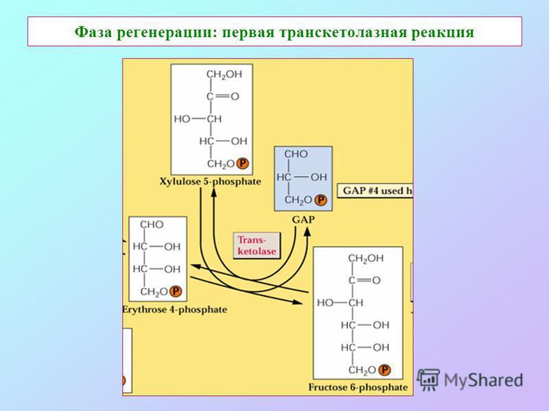 Фаза регенерации: первая транскетолазная реакция