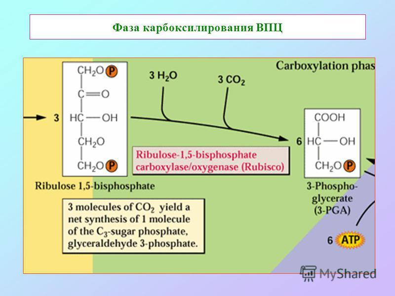 Фаза карбоксилирования ВПЦ