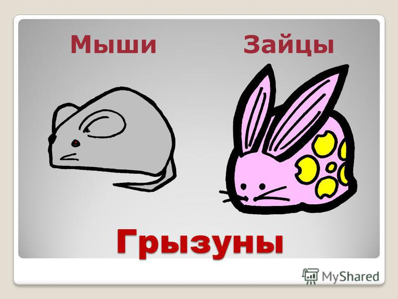 Грызуны Мыши Зайцы