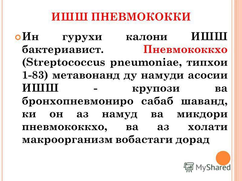 ИШШ ПНЕВМОКОККИ Ин гурухи колони ИШШ бактериавист. Пневмококкхо (Streptococcus pneumoniae, типхои 1-83) метавонанд ду намути асосии ИШШ - крупози ва бронхопневмония собак шаванд, ки он аз намуд ва микдори пневмококк хо, ва аз холати макроорганизм воб