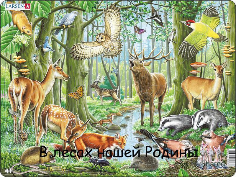 В лесах нашей Родины