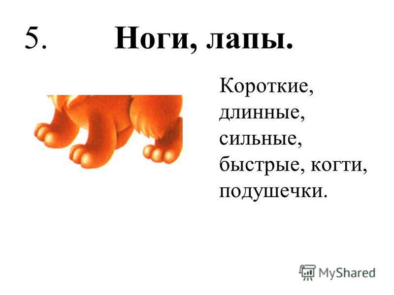 5. Ноги, лапы. Короткие, длинные, сильные, быстрые, когти, подушечки.