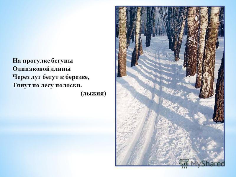 На прогулке бегуны Одинаковой длины Через луг бегут к березке, Тянут по лесу полоски. (лыжня)