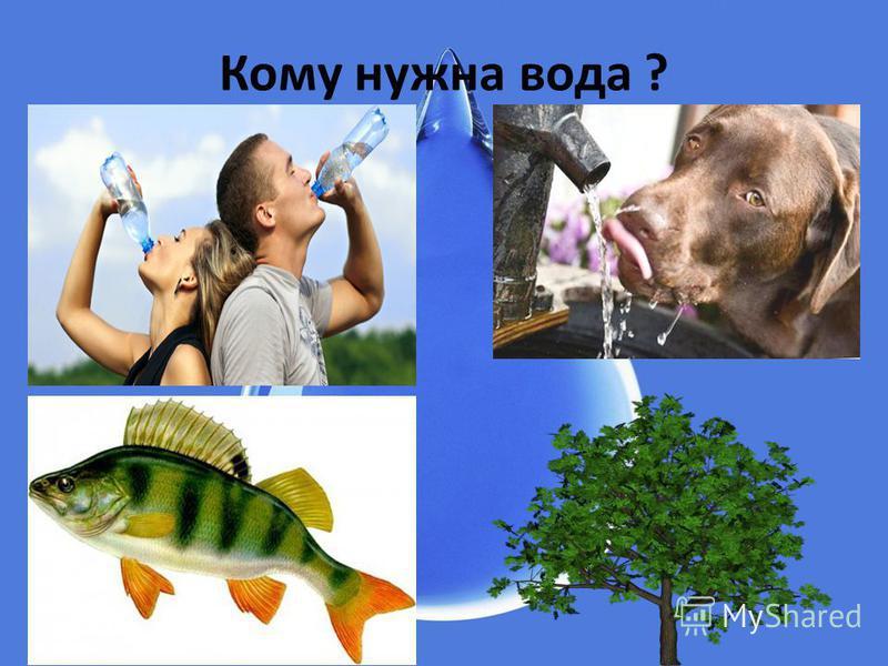 Кому нужна вода ?