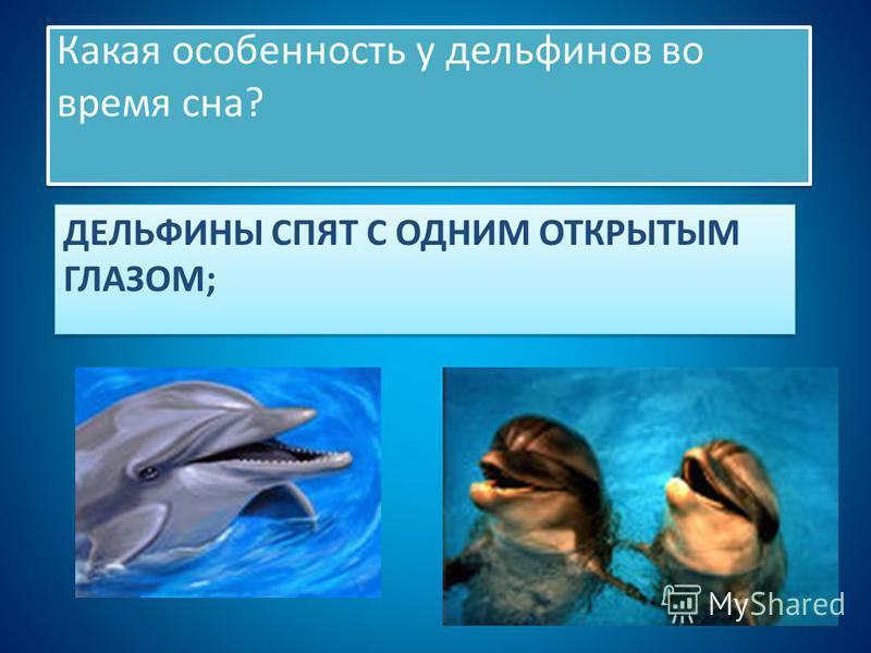 ДЕЛЬФИНЫ СПЯТ С ОДНИМ ОТКРЫТЫМ ГЛАЗОМ; Какая особенность у дельфинов во время сна?
